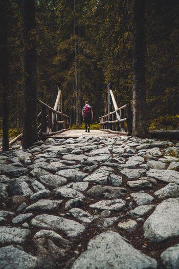 Rear View Of Man Walking On Footbridge Amidst Trees In Forest