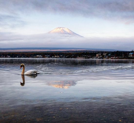 Mount Fuji in the morning mist Reflection Water Lake Outdoors Scenics Beauty In Nature Beach Nature Sky No People Day