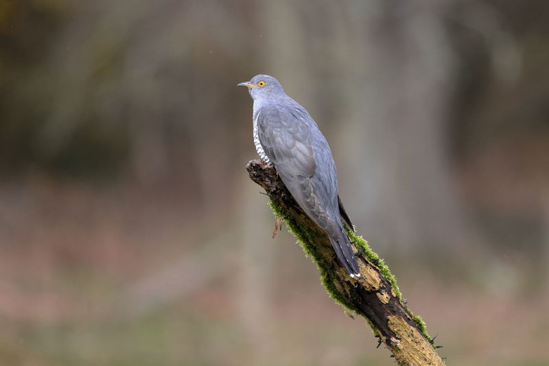 Close-up of bird perching on branch against blurred background