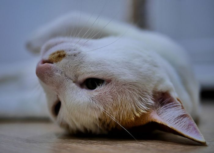 Close-up of a cat sleeping