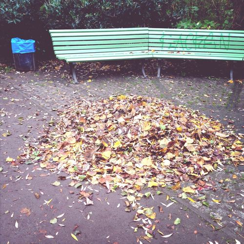 Leaves and park