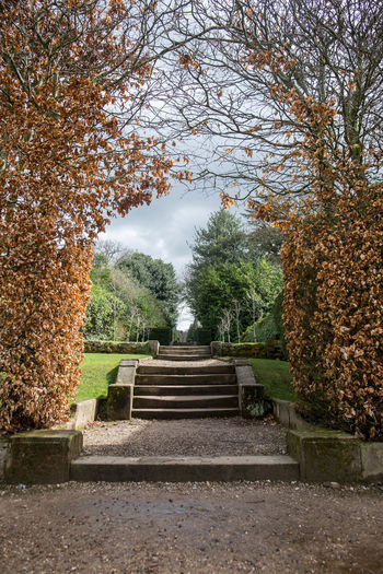 Autumn Beauty In Nature Branch Built Structure Day Growth Leaf Nature No People Outdoors Park - Man Made Space Plant Railing Sky Steps Steps And Staircases The Way Forward Tranquil Scene Tranquility Tree