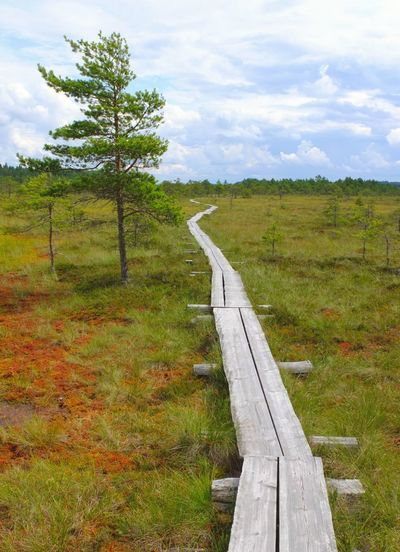 Duckboards at Torronsuo National Park, Finland Cloud - Sky Day Duckboard Finland Grass Hiking Landscape Nature Nature Reserve No People Outdoors Sky Swamp Swamp Photos The Way Forward Torronsuo Tree