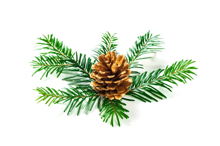 Directly above shot of pine cone against white background
