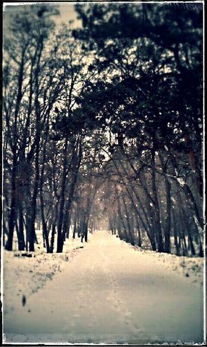 Trees во время прогулки