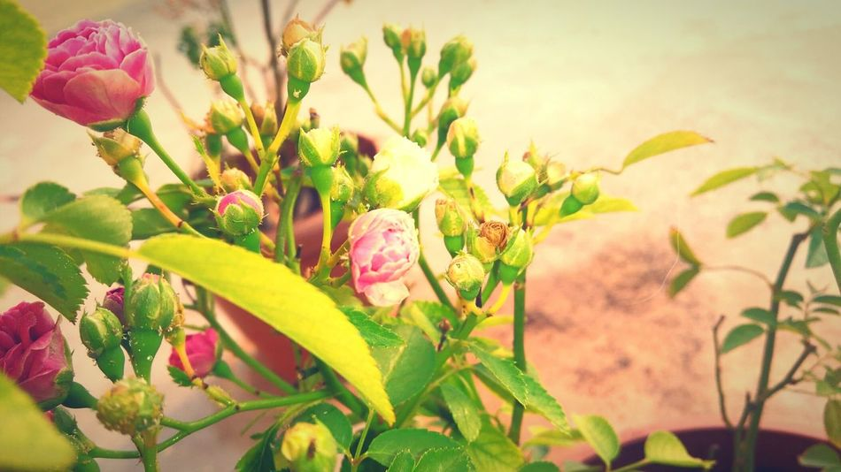 Mornig vibes Plant Nature Flower Growth Beauty In Nature Fragility Flower Head Pink Color Outdoors Leaf Orchid No People Freshness Close-up Day Sun Fragnance First Eyeem Photo