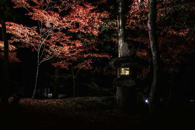 Illuminated trees in forest during autumn