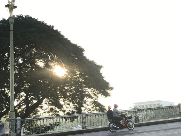 Sunday Morning Across Bridge Humanride Sunlight Sunrise Tree Transportation