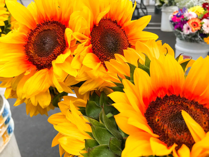 Beauty In Nature Bouquet Close-up Day Flower Flower Arrangement Flower Head Flowering Plant Fragility Freshness Gazania Growth Inflorescence Nature No People Outdoors Petal Plant Pollen Sunflower Yellow