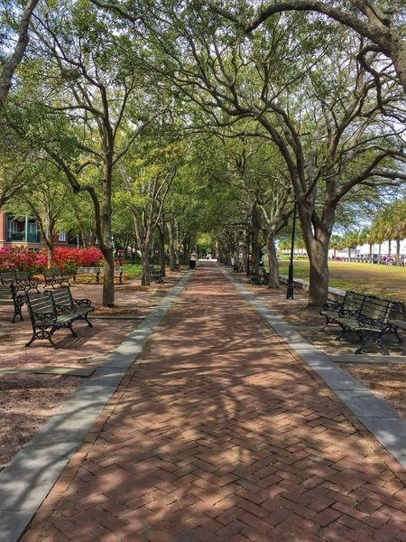 Charleston Walkway Live Oak Tree The Way Forward Treelined Nature Outdoors Growth Tranquility Beauty In Nature No People City Day