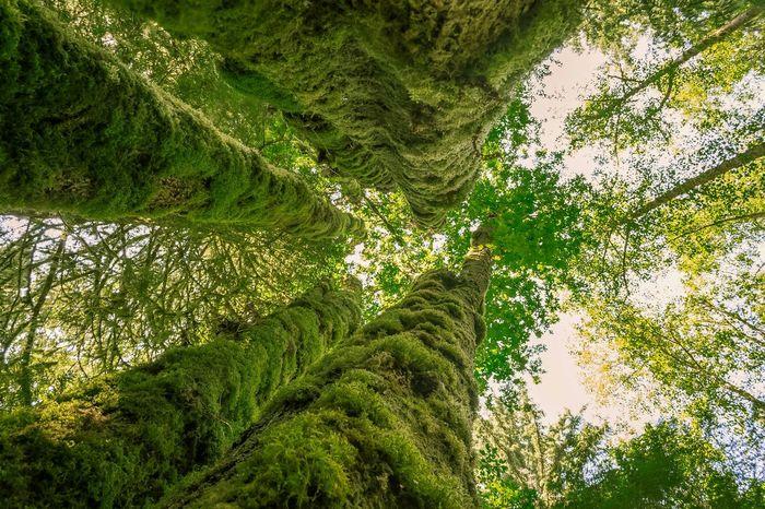 Livewashington Pacific Northwest  Washington State Evergreen State Tall Tree PNW Green King5