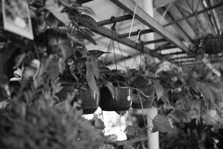 Beauty In Nature Black & White Black And White Blackandwhite Blackandwhite Photography Close-up Day Fragility Fujifilm Greenhouse Growth Indoors  Monochrome Nature No People Plant