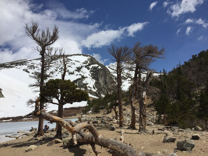 View of dead tree on mountain against sky
