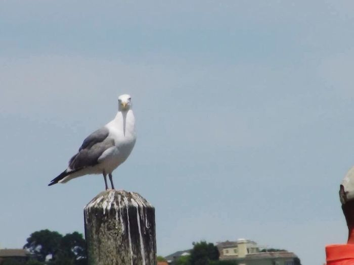 Another Silly Sea Bird Sitting On. Dock In A Bay... Hello World Check This Out Outdoor Beauty