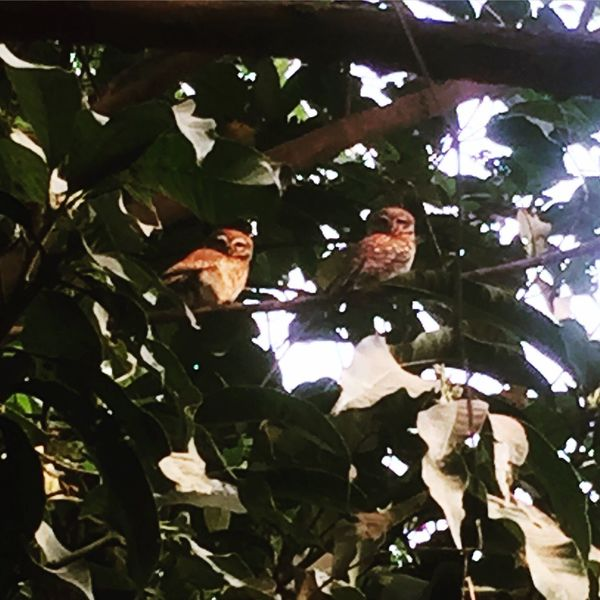 A Couple Of Owl found in My Garden This Morning. Bird Photography Bird Lovers