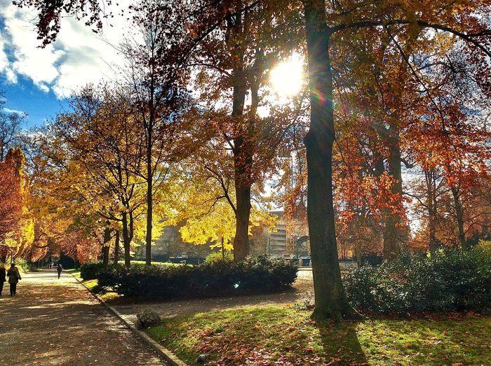 Autumn Light And Shadow Nature Outdoors Park Park - Man Made Space Platzspitz Trees Zürich