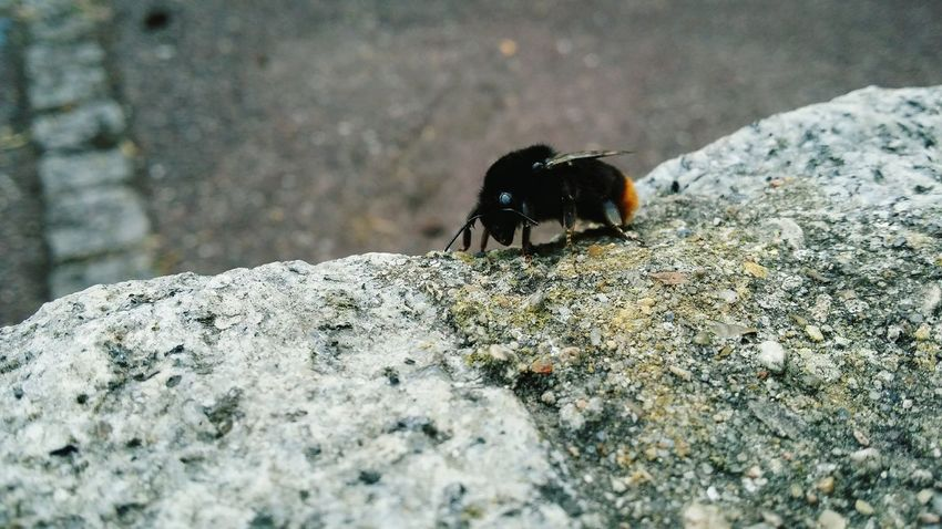 Bees Flower Wildlife Nature Urbanphotography Paris, France  Animals Insects  Working Hard A New Perspective On Life