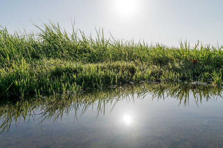 Grass Green Color Reflection Schaumburg Vornhagen Blau Blue Wasser Water