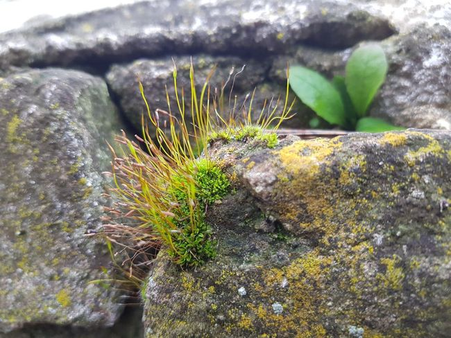 Little Nature Green Color Stone Close-up Nature Nature Photography Moss