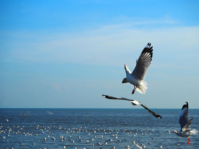 💙☁️🕊☁️🕊💙 Capture The Moment Bangpu Animal Wildlife Bird Sea Animals In The Wild Animal Themes Animal Flying Horizon Over Water Water Horizon Sky Spread Wings Group Of Animals Seagull Nature Beauty In Nature Scenics - Nature No People Outdoors Exceptional Photographs Tadaa Community Freedom Clear Sky Blue Sky Blue Sea