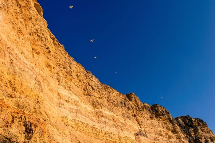 Cliff Edge Nature Beauty In Nature Clear Sky Blue Low Angle View Scenics Tranquil Scene Tranquility No People Outdoors Day Sky Birds Seagulls Birds And Blue Sky Cliff Cliffside Rocks EyeEm Best Shots EyeEm Nature Lover EyeEmNewHere Eye4photography  EyeEm Best Shots - Nature Eye For Photography