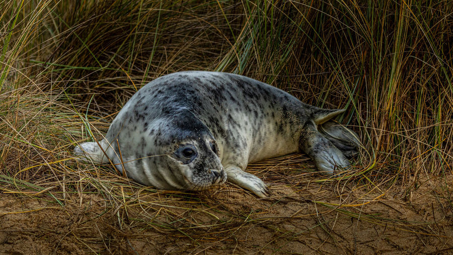 View of an animal sleeping on grass