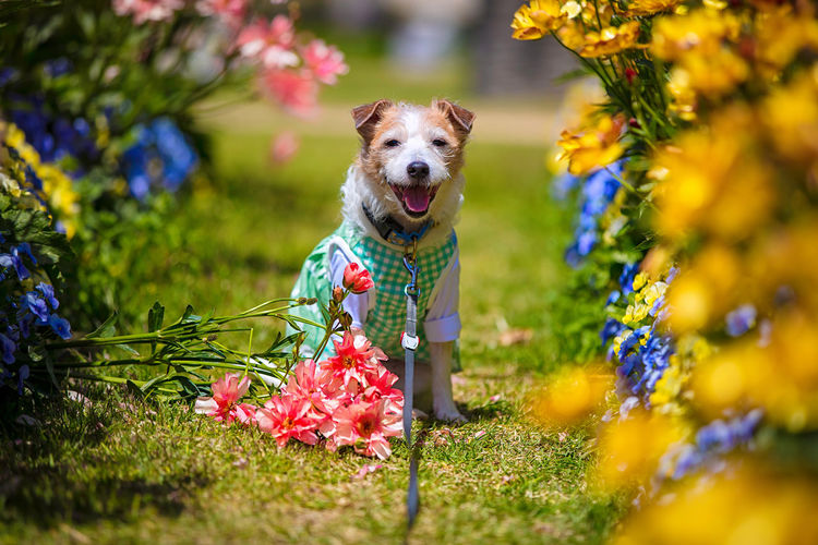 Dog running on flower