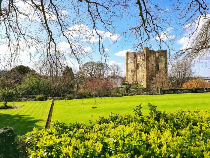 Sky Nature Grass No People Day Flower Beauty In Nature Outdoors Clear Sky Green Color Architecture Guildford Castle Castle The Great Outdoors - 2017 EyeEm Awards