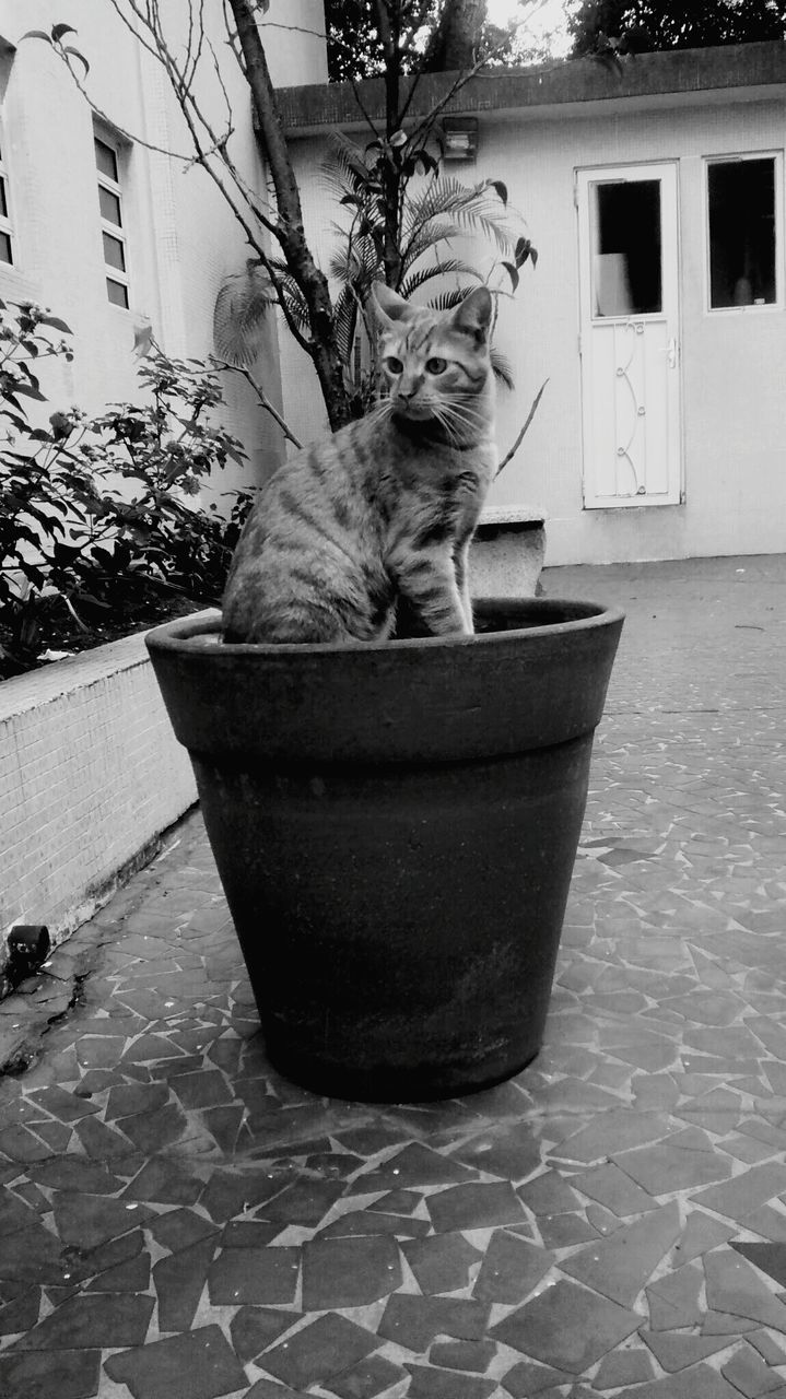 Cat On Pot Plant And Looking Away
