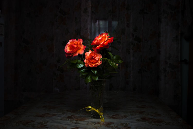 Rose♥ Flower Red No People Bouquet Indoors  Day Dark Photography Back Lit Studio Session PNWonderland