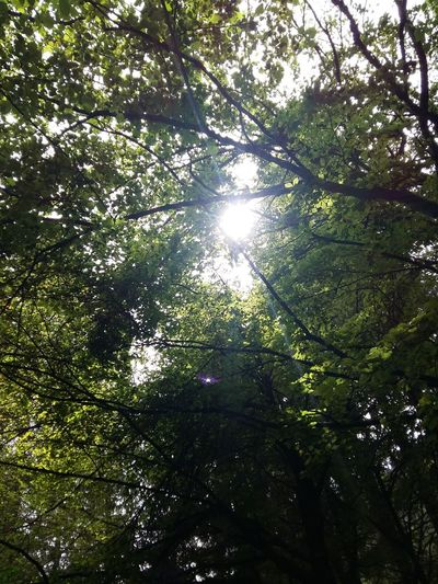 Can You See The Light? Light And Shadow Tree Forest Sunlight Sky Green Color Shining Sunbeam Sun