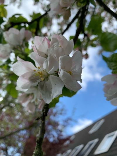 Blossom from