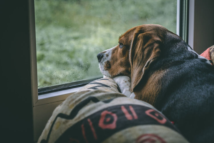 Close-up of dog looking through window at home