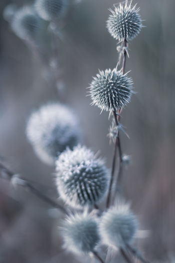 Flowers in spring Flower Plant Flowering Plant Fragility Vulnerability  Freshness Beauty In Nature Focus On Foreground Close-up Growth Nature No People Day Outdoors Flower Head Softness