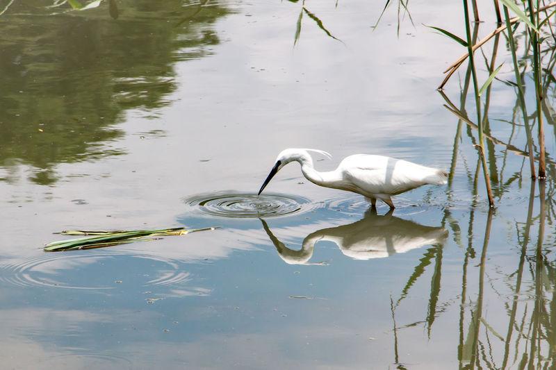 Africa Animal Themes Animal Wildlife Animals In The Wild Animals In The Wild Bird Birds Lake Nature No People One Animal Outdoors Pretoria Reflection South Africa Water Water Bird Wildlife & Nature