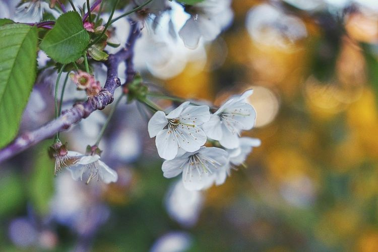 Touch of spring Flower Fragility Nature Petal Beauty In Nature Growth White Color Close-up Day Freshness No People Flower Head Outdoors Focus On Foreground Springtime Plant Tree Branch Blooming Animal Themes