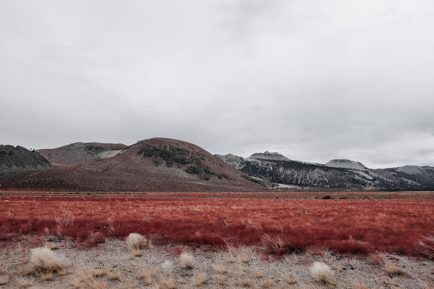 The grass is always more red on the other side of the fence. Beauty In Nature California Cloud - Sky Day Is This Real? Landscape Mono County Mountain Mountains Nature No People Outdoors Red Grass Scenics Sky Sky And Clouds Unreal USA The Great Outdoors - 2017 EyeEm Awards