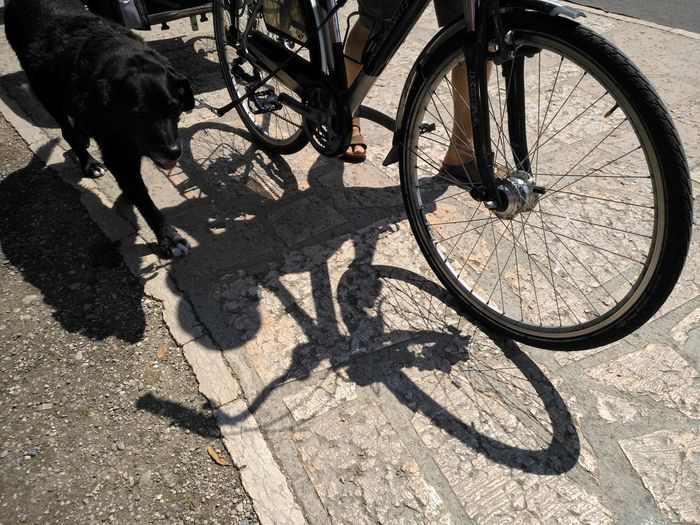 The Best Friends ♥  No Filter Shadow Bicycle Sunlight Pets The Photojournalist - 2018 EyeEm Awards The Street Photographer - 2018 EyeEm Awards
