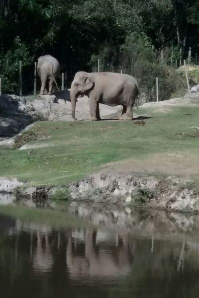 EyeEm New Here Elefants Elephants Elegantes Reflexo  Reflection No People Zoo Outdoors Beauty In Nature Sunlight Wild Animal Themes EyeEmNewHere EyeEm Selects