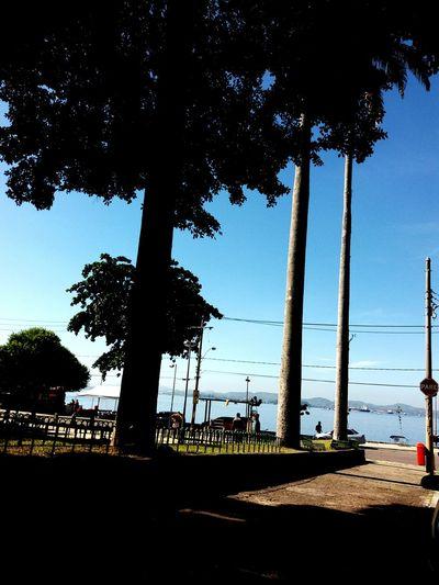 Tree Sky No People Day Beach Blue Water Nature Sea Island Ilha IlhaDoGovernador Riodejaneiro Rio Photography Rio De Janeiro Eyeem Fotos Collection⛵ People Live For The Story Live For The Story