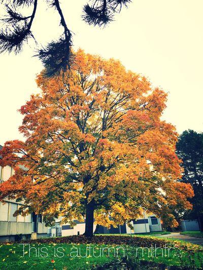 Autumn. Beautiful autumn. France White_head Check This Out Hello World Relaxing Enjoying Life Nature Autumn Yellow Tree