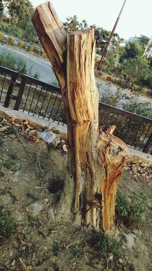 Tree Day Wood -