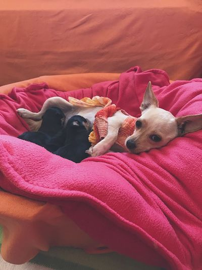 Hey mommy Puppies Mammal Pets Dog Animal Themes Animal Relaxation Resting Indoors  Home Interior No People My Best Photo My Best Photo