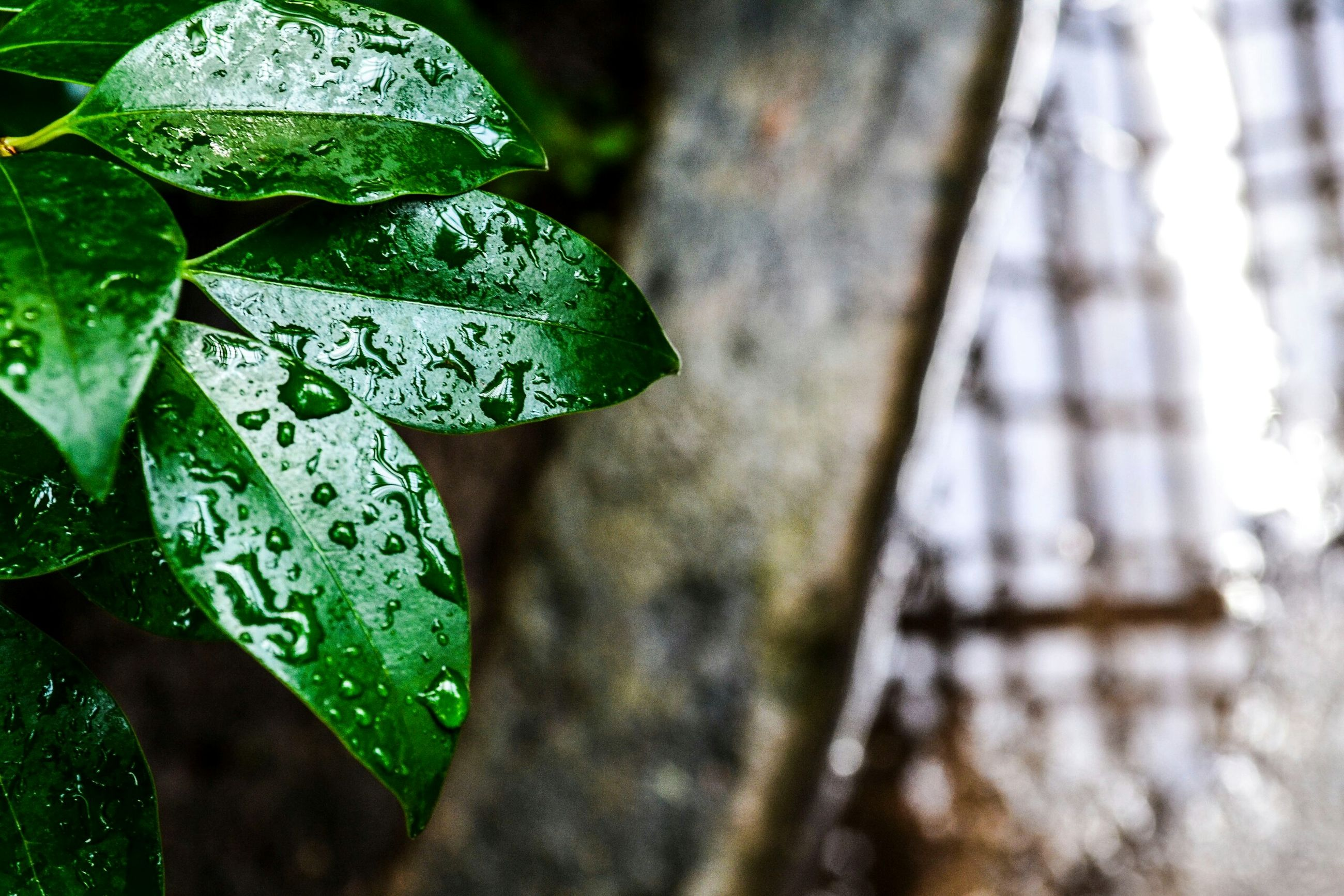 leaf, close-up, green color, focus on foreground, selective focus, leaf vein, growth, drop, nature, water, wet, leaves, plant, freshness, beauty in nature, natural pattern, day, outdoors, green, fragility