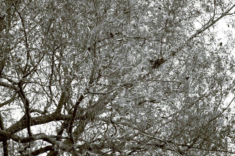 Canonphotography Canon Orléans Nature Is Beautiful Arbre Tout Nu Branches Arbre Love Photo