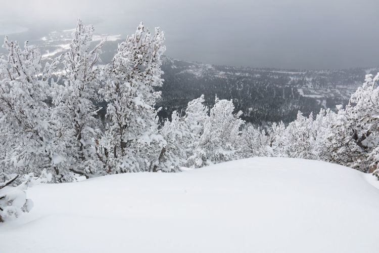 Winter Wonderland ❄ White Color Tree South Lake Tahoe Nature Cold Temperature Beauty In Nature Heavenly Ski Resort Tranquil Scene Landscape Sierra Nevada Mountains Gray Skies