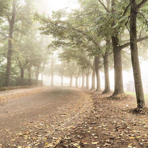 Nature Trees Autumn ITIS Cardano School Time Beautiful Day Cool