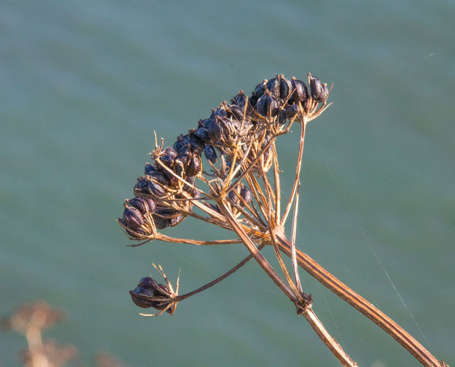 Close-up of dead plant in lake