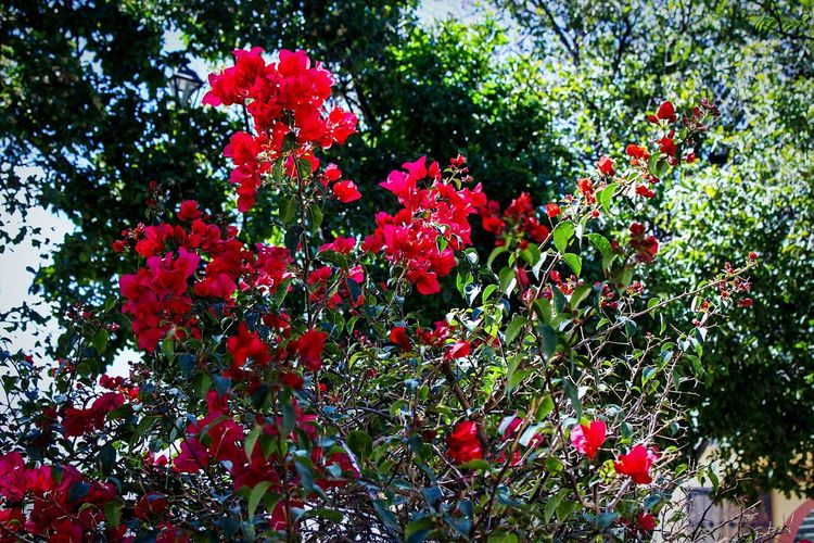 Red flowers blooming on tree