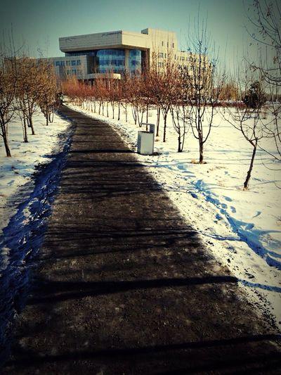 冬日 去往图书馆的路